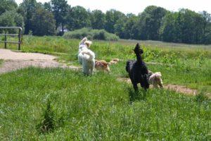 Angst voor honden – impulsbeheersing