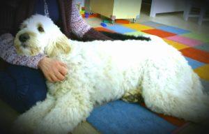 Coachen met honden – wat kan de hond voor jou betekenen |deel 1